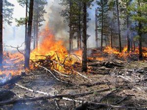 quema de bosques 2